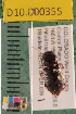 (Carabidae D10morph_L - D10.000355)  @14 [ ] Copyright (2010) National Ecological Observatory Network, Inc. National Ecological Observatory Network (NEON) http://www.neoninc.org/content/copyright