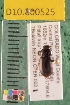 (Carabidae D10morph_N - D10.000525)  @12 [ ] Copyright (2010) National Ecological Observatory Network, Inc. National Ecological Observatory Network (NEON) http://www.neoninc.org/content/copyright