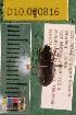 (Carabidae D10morph_D - D10.000816)  @12 [ ] Copyright (2010) National Ecological Observatory Network, Inc. National Ecological Observatory Network (NEON) http://www.neoninc.org/content/copyright