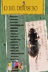 (Carabidae D10morph_I - D10.000830)  @12 [ ] Copyright (2010) National Ecological Observatory Network, Inc. National Ecological Observatory Network (NEON) http://www.neoninc.org/content/copyright