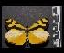 (Enantia ssp2MEX - MAL-05549)  @14 [ ] Copyright (2012) Unspecified Museo de Zoologia, Facultad de Ciencias, UNAM