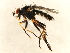 (Eustalomya - 10JSROW-0805)  @14 [ ] CreativeCommons - Attribution Non-Commercial Share-Alike (2010) BIO Photography Group Biodiversity Institute of Ontario
