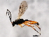 (Ichneumonidae sp. MAS BIN320 - BIOUG01028-E06)  @11 [ ] CreativeCommons - Attribution Non-Commercial Share-Alike (2011) BIO Photography Group Biodiversity Institute of Ontario
