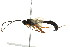 (Ichneumonidae sp. mas BIN480 - BIOUG01023-A09)  @13 [ ] CreativeCommons - Attribution Non-Commercial Share-Alike (2011) BIO Photography Group Biodiversity Institute of Ontario