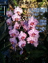  (Dendrobium - BIO_Orchidaceae_04Feb11)  @11 [ ] Unspecified (default): All Rights Reserved  Unspecified Unspecified