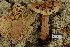  (Tricholoma aestuans - TRTC156472)  @11 [ ] CreativeCommons - Attribution Non-Commercial Share-Alike (2010) Unspecified Royal Ontario Museum