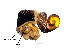 (Hydrobioides - CM111_001)  @13 [ ] Copyright (2012) Jutharat Knon Kaen University