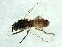 (Simulium anatinum/randalense - 09PROBE-JW1340)  @13 [ ] CreativeCommons - Attribution Non-Commercial Share-Alike (2010) Biodiversity Institute of Ontario 2010 Biodiversity Institute of Ontario