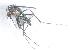 (Aedes luteocephalus - 14702-AelutC12)  @14 [ ] Copyright (2012) Yvonne U Ajamma icipe