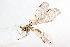 (Berothinae - 19595BeroH8)  @11 [ ] Copyright (2013) RS Copeland icipe
