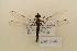 (Chlorocyphidae - NAT 546)  @14 [ ] Copyright (2011) NMK National Museums of Kenya