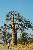 (Adansonia - OM1306)  @11 [ ] Unspecified (default): All Rights Reserved  Unspecified Unspecified