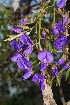 (Bolusanthus - RL1251)  @11 [ ] Unspecified (default): All Rights Reserved  Unspecified Unspecified
