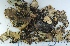 (Peltigera degenii - KNWR Herb 9053)  @11 [ ] by-nc-sa (2013) Unspecified U.S. Fish & Wildlife Service