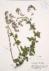 (Origanum - AP417)  @11 [ ] Unspecified (default): All Rights Reserved  Unspecified Unspecified