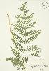 ( - AP097)  @11 [ ] Copyright (2009) Unspecified University of Guelph BIO Herbarium