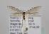 (Coleophora auricella - TLMF Lep 14678)  @14 [ ] CreativeCommons - Attribution Non-Commercial Share-Alike (2014) Peter Huemer Tiroler Landesmuseum Ferdinandeum