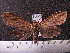 (Arctiinae sp. JAT13 - MMZ1239)  @12 [ ] CreativeCommons - Attribution Non-Commercial (2012) Mauricio M. Zenker UFPR