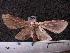 (Arctiinae sp. JAT14 - MMZ1103)  @13 [ ] CreativeCommons - Attribution Non-Commercial (2012) Mauricio M. Zenker UFPR