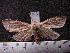 (Arctiinae sp. JAT14 - MMZ1244)  @13 [ ] CreativeCommons - Attribution Non-Commercial (2012) Mauricio M. Zenker UFPR