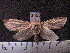 (Arctiinae sp. JAT15 - MMZ1249)  @13 [ ] CreativeCommons - Attribution Non-Commercial (2012) Mauricio M. Zenker UFPR