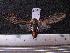(Arctiinae sp. JAT27 - MMZ1113)  @13 [ ] CreativeCommons - Attribution Non-Commercial (2012) Mauricio M. Zenker UFPR
