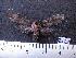 (Arctiinae sp. JAT06 - MMZ1067)  @12 [ ] CreativeCommons - Attribution Non-Commercial (2012) Mauricio M. Zenker UFPR