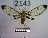 (Arctiinae sp. JAT15 - MMZ1050)  @13 [ ] CreativeCommons - Attribution Non-Commercial (2012) Mauricio M. Zenker UFPR