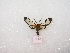 (Aristodaema - MACN-Bar-Lep-ct 02950)  @13 [ ] Copyright (2011) MACN Museo Argentino de Ciencias Naturales