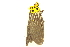 (Baroa - BIOUG06552-G05)  @13 [ ] CreativeCommons - Attribution Non-Commercial Share-Alike (2014) BIO Photography Group Biodiversity Institute of Ontario
