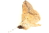 (Armana - BIOUG08651-E07)  @13 [ ] CreativeCommons - Attribution Non-Commercial Share-Alike (2014) BIO Photography Group Biodiversity Institute of Ontario