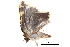 (Cossedia - BIOUG12334-E12)  @11 [ ] CreativeCommons - Attribution Non-Commercial Share-Alike (2014) BIO Photography Group Biodiversity Institute of Ontario