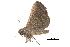 (Hadennia - BIOUG14383-F12)  @14 [ ] CreativeCommons - Attribution Non-Commercial Share-Alike (2014) BIO Photography Group Biodiversity Institute of Ontario