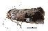 (Miaromima - BIOUG13431-C03)  @14 [ ] CreativeCommons - Attribution Non-Commercial Share-Alike (2014) BIO Photography Group Biodiversity Institute of Ontario