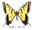 (Papilio multicaudatus - RR-PTMU-ND002)  @14 [ ] Unspecified (default): All Rights Reserved  Unspecified Unspecified