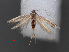 (Coleophora jerusalemella - RMNH.INS.537670)  @11 [ ] CreativeCommons - Attribution Non-Commercial Share-Alike (2012) Unspecified Naturalis, Biodiversity Centre