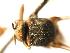(Simulium freemani - SIM-CANADA-430)  @11 [ ] CreativeCommons - Attribution Non-Commercial Share-Alike (2009) Unspecified Biodiversity Institute of Ontario