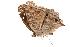 (Junonia rhadama - AC0469-8001637)  @13 [ ] CreativeCommons - Attribution Non-Commercial Share-Alike (2010) Unspecified Biodiversity Institute of Ontario