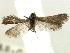 (Heterobathmiidae - CCDB-22946-B11)  @11 [ ] CreativeCommons - Attribution Non-Commercial Share-Alike (2014) BIO Photography Group Biodiversity Institute of Ontario