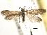 (Heterobathmiidae - CCDB-22946-C06)  @11 [ ] CreativeCommons - Attribution Non-Commercial Share-Alike (2014) BIO Photography Group Biodiversity Institute of Ontario