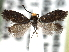 (Eriocraniidae - CCDB-22946-E06)  @15 [ ] CreativeCommons - Attribution Non-Commercial Share-Alike (2014) BIO Photography Group Biodiversity Institute of Ontario