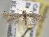 (Coleophora JFL308 - BIOUG06258-H07)  @12 [ ] CreativeCommons - Attribution Non-Commercial Share-Alike (2013) BIO Photography Group Biodiversity Institute of Ontario