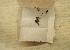 (Radula aquilegia - CCDB-21453 B11)  @11 [ ] Creative Commons – Attribution Non-Commercial Share-Alike (2014) NTNU University Museum, Department of Natural History NTNU University Museum, Department of Natural History