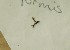(Tetralophozia - CCDB-21453 D12)  @11 [ ] Creative Commons – Attribution Non-Commercial Share-Alike (2014) NTNU University Museum, Department of Natural History NTNU University Museum, Department of Natural History