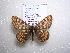  (Euphydryas merope altivolans - 2005-LOWA-112)  @14 [ ] CreativeCommons - Attribution Non-Commercial Share-Alike (2010) Unspecified Biodiversity Institute of Ontario
