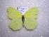 (Gonepteryx farinosa chitralensis - 2005-LOWA-319)  @13 [ ] CreativeCommons - Attribution Non-Commercial Share-Alike (2010) Unspecified Biodiversity Institute of Ontario