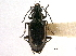 (Bembidion chalceum - CCDB-21405-A06)  @11 [ ] CreativeCommons - Attribution Non-Commercial Share-Alike (2014) BIO Photography Group Biodiversity Institute of Ontario