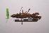 (Polyspilota - LopeMAN14-022)  @13 [ ] CreativeCommons - Attribution Non-Commercial Share-Alike (2014) Nicolas Moulin Nicolas Moulin entomologie