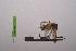 (Amorphoscelidae - LopeMAN14-220)  @13 [ ] by-nc-sa (2014) Nicolas Moulin Nicolas Moulin entomologie
