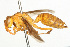  (Polistes flavus - NIBGE IMB-00112)  @14 [ ] CreativeCommons - Attribution Non-Commercial (2009) Muhammad Ashfaq, NIBGE Unspecified